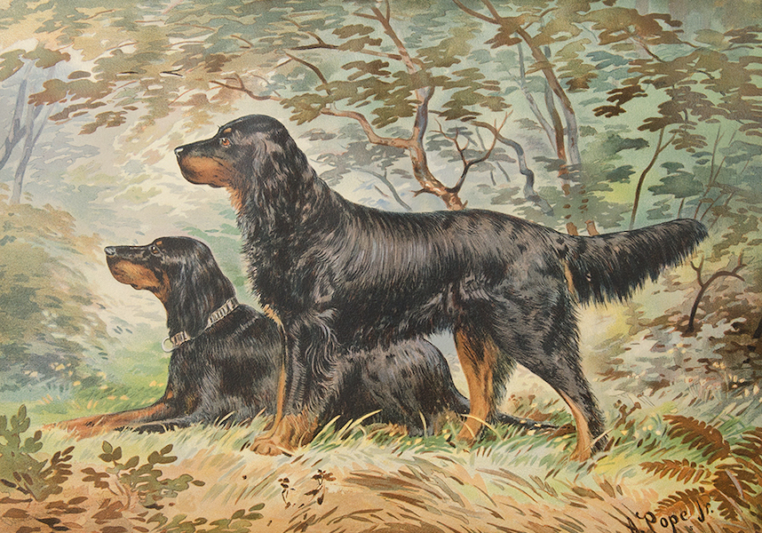The Celebrated Dogs of America - [Dog No. 6] (1879)