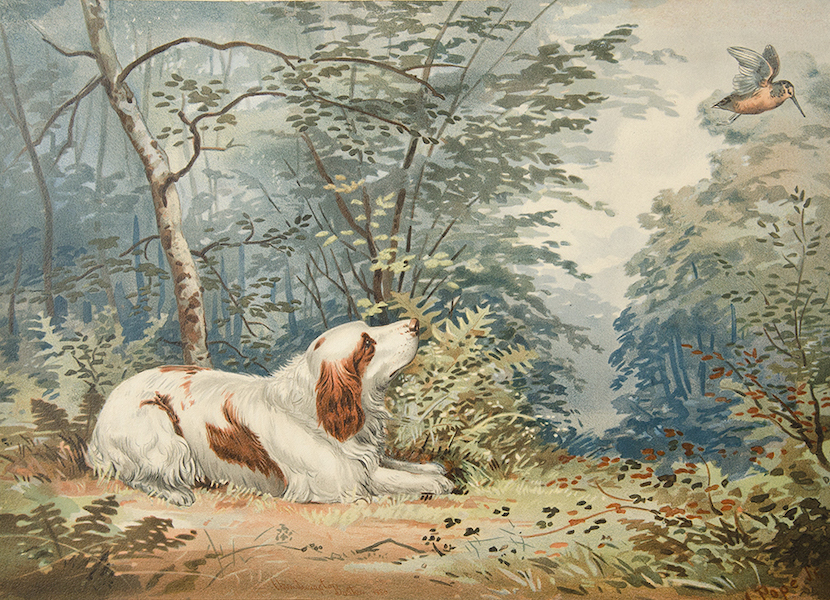 The Celebrated Dogs of America - [Dog No. 7] (1879)
