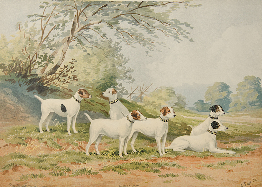 The Celebrated Dogs of America - [Dog No. 8] (1879)