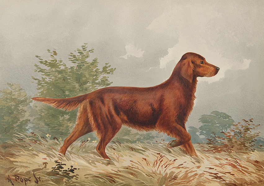 The Celebrated Dogs of America - [Dog No. 9] (1879)