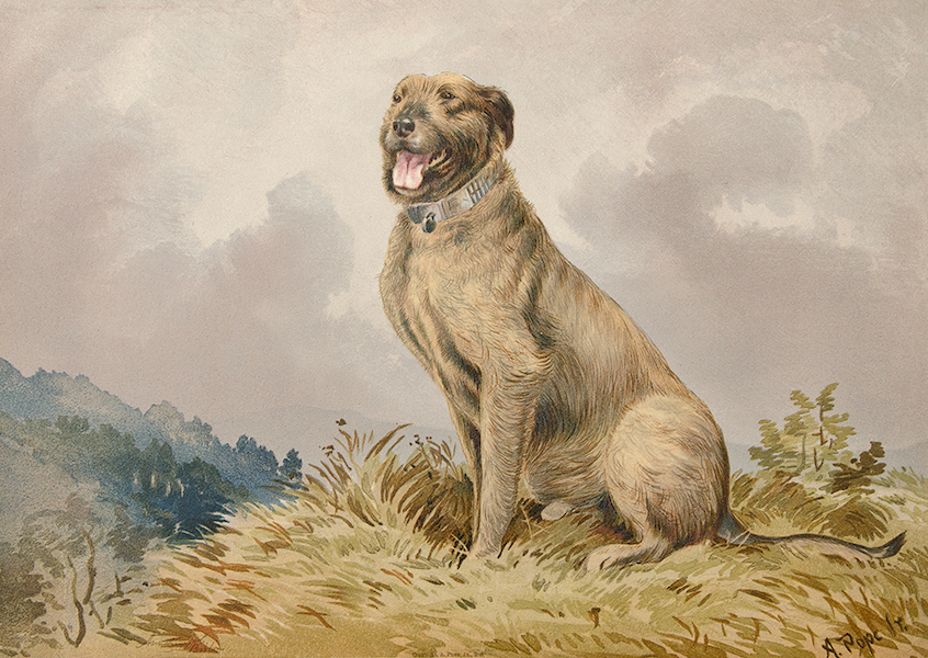 The Celebrated Dogs of America - [Dog No. 10] (1879)