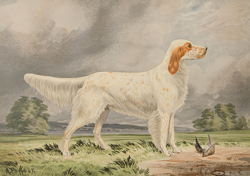 The Celebrated Dogs of America - [Dog No. 11] (1879)