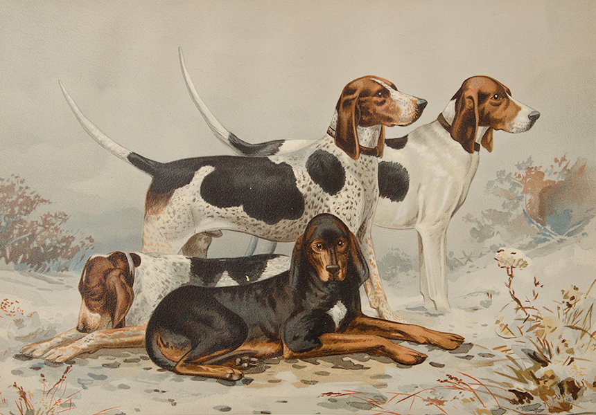 The Celebrated Dogs of America - [Dog No. 12] (1879)