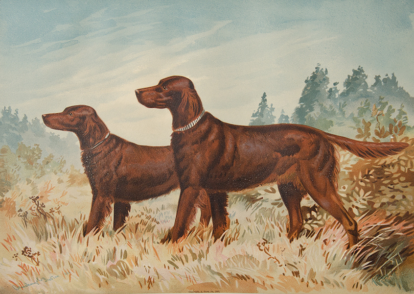 The Celebrated Dogs of America - [Dog No. 13] (1879)