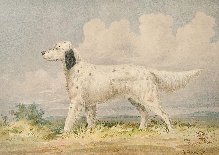 The Celebrated Dogs of America - [Dog No. 14] (1879)