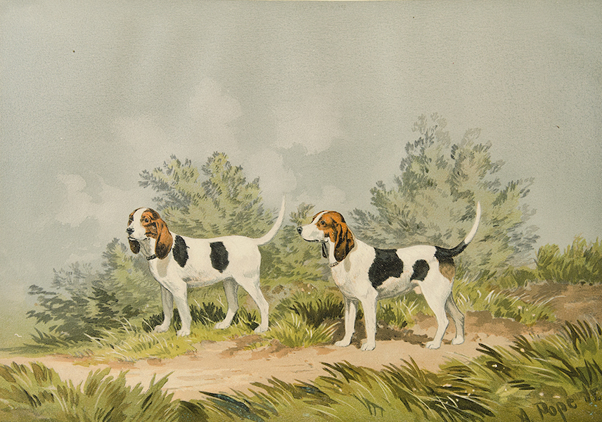 The Celebrated Dogs of America - [Dog No. 16] (1879)