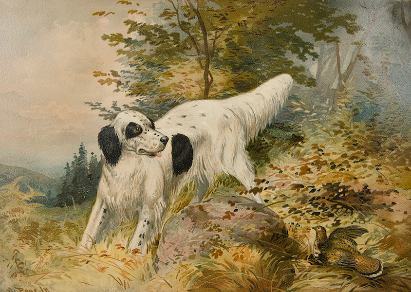 The Celebrated Dogs of America - [Dog No. 18] (1879)