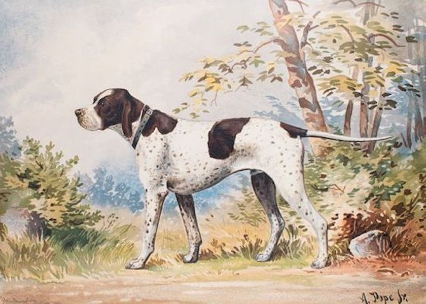 The Celebrated Dogs of America - [Dog No. 20] (1879)