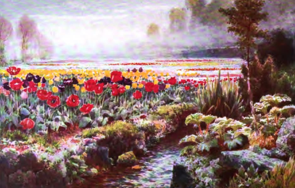 The Channel Islands Painted and Described - A Tulip Garden, Guernsey (1904)