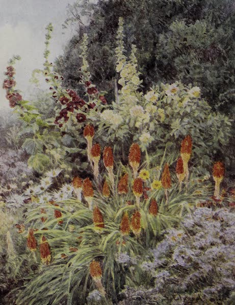 The Charm of Gardens - Torch Lily and Hollyhocks (1910)