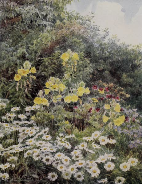 The Charm of Gardens - Evening Primrose (1910)