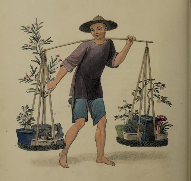 The Costume of China - A Porter with Fruit-trees and Flowers (1800)