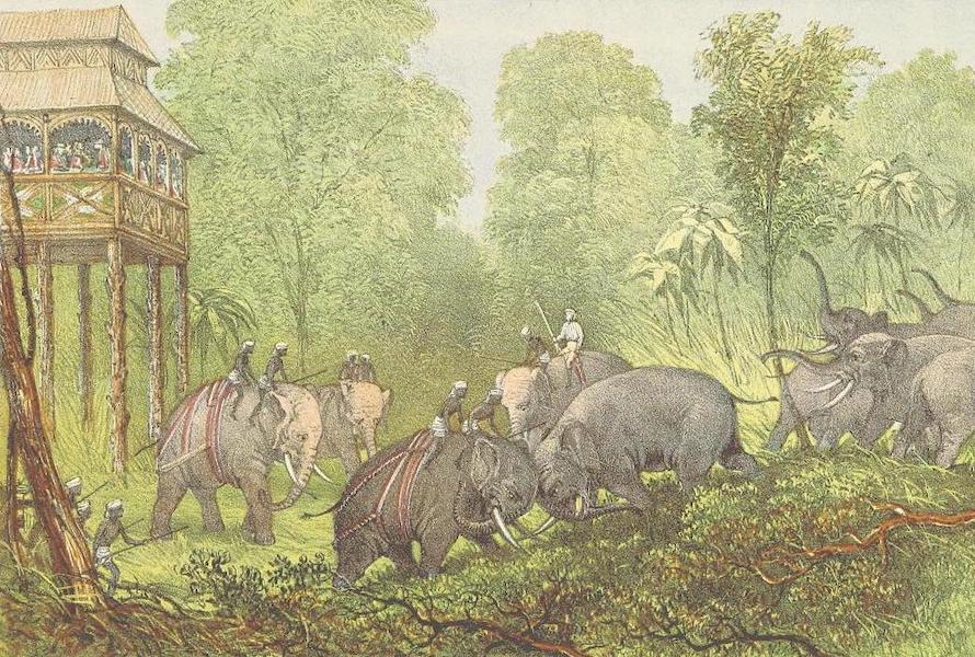 The Duke of Edinburgh in Ceylon - The Encounter in the Kraal (1871)