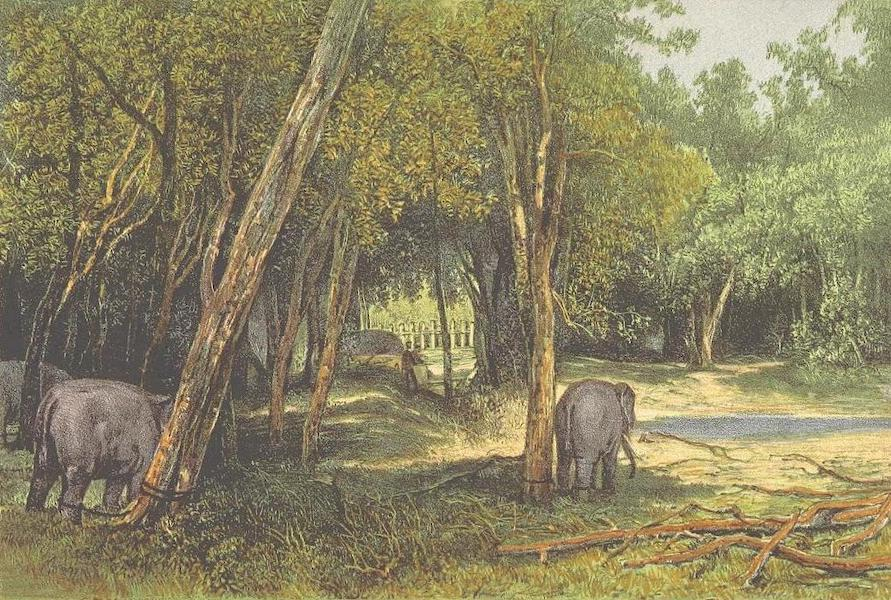 The Duke of Edinburgh in Ceylon - Interior of the Kraal (1871)