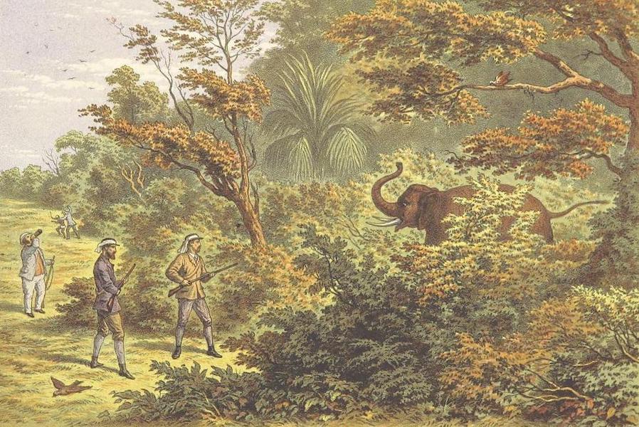 The Duke of Edinburgh in Ceylon - The Duke Charged by an Elephant (1871)