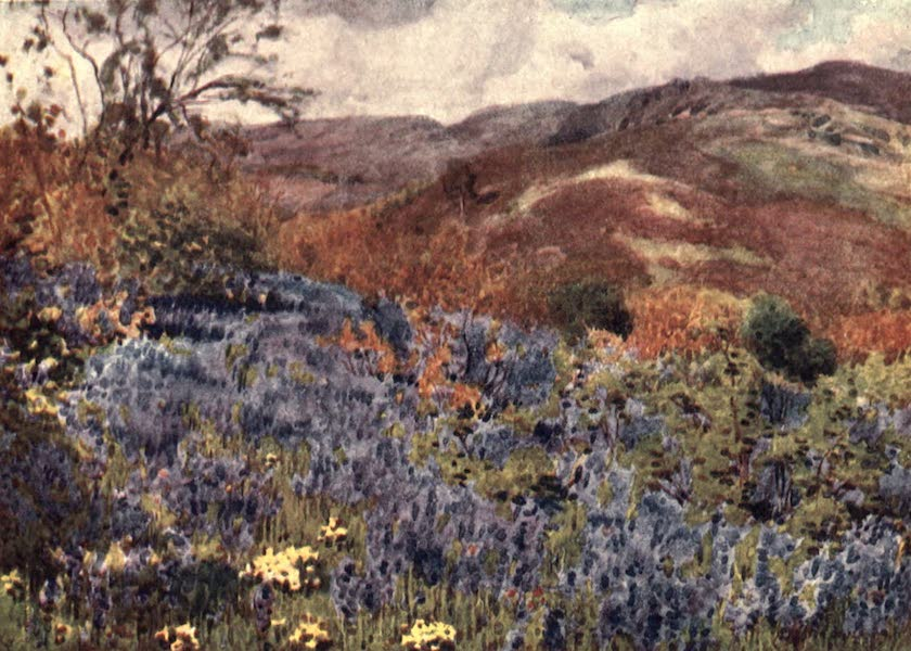 The English Lakes Painted and Described - Wild Hyacinths (1908)