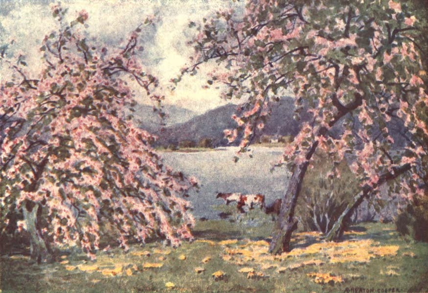 The English Lakes Painted and Described - Esthwaite Water: Apple Blossom (1908)