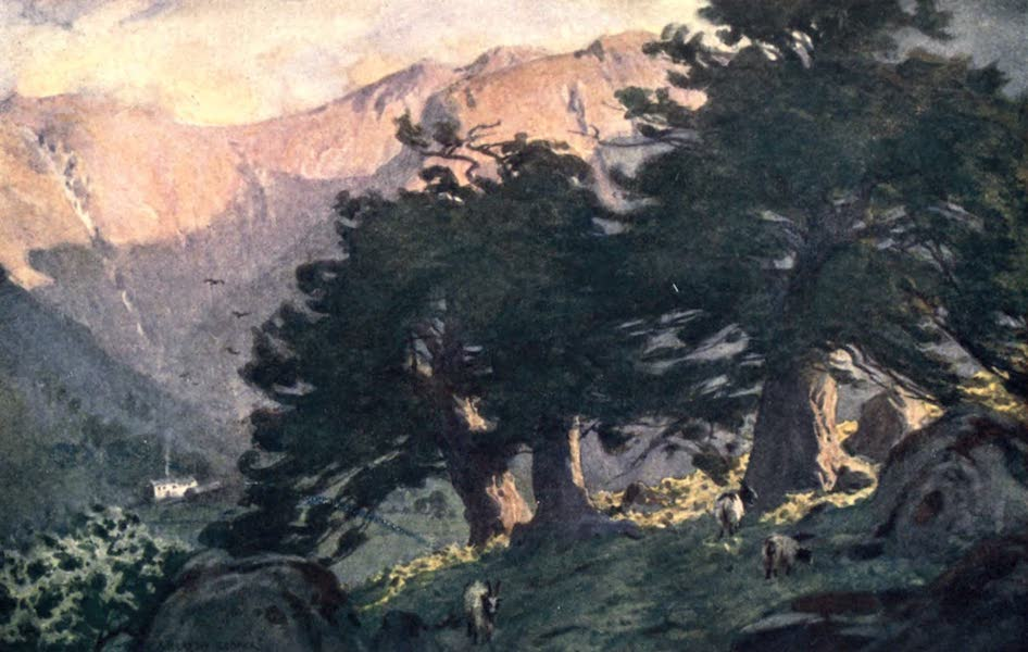 The English Lakes Painted and Described - The Borrowdale Yews (evening) (1908)