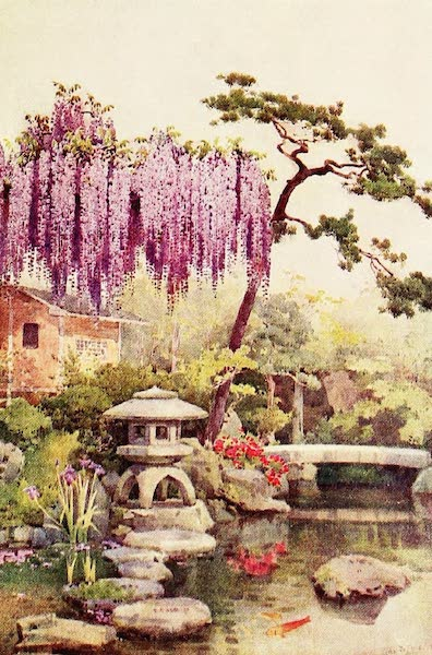 The Flowers and Gardens of Japan - Wistaria in a Kyoto Garden (1908)