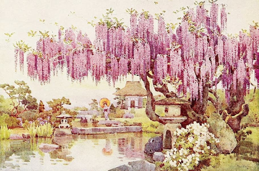 The Flowers and Gardens of Japan - The Old Wistaria (1908)