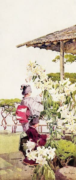 The Flowers and Gardens of Japan - Lilinm Auratum (1908)