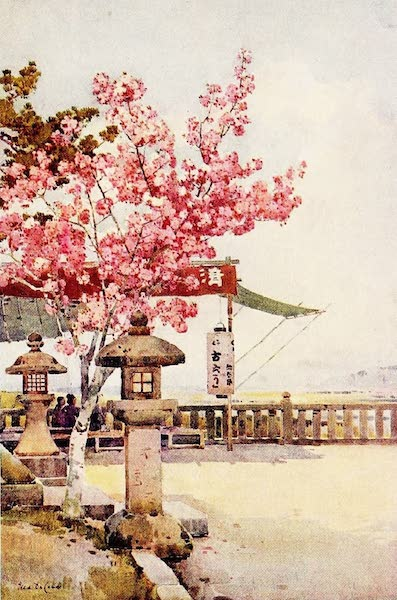The Flowers and Gardens of Japan - The Pink Cherry (1908)