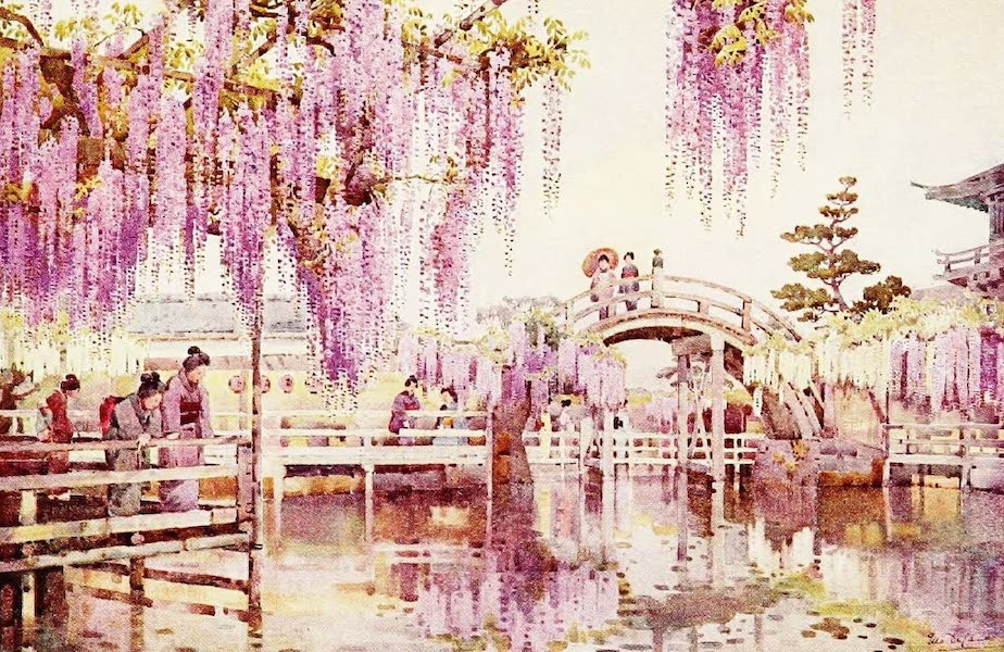 The Flowers and Gardens of Japan - Wistaria, Kameido (1908)