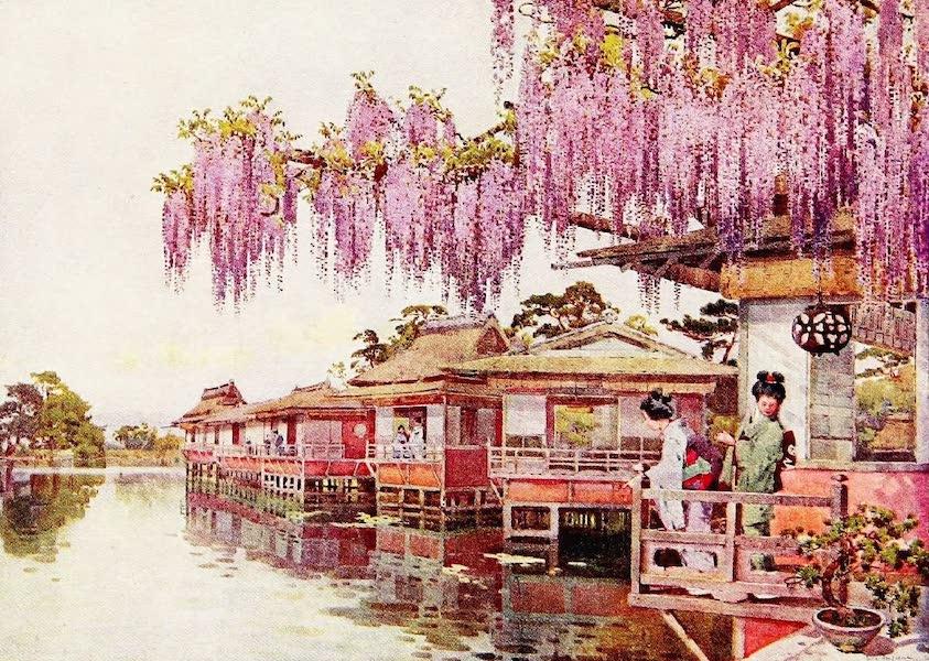 The Flowers and Gardens of Japan - Wistaria, Nagaoka (1908)