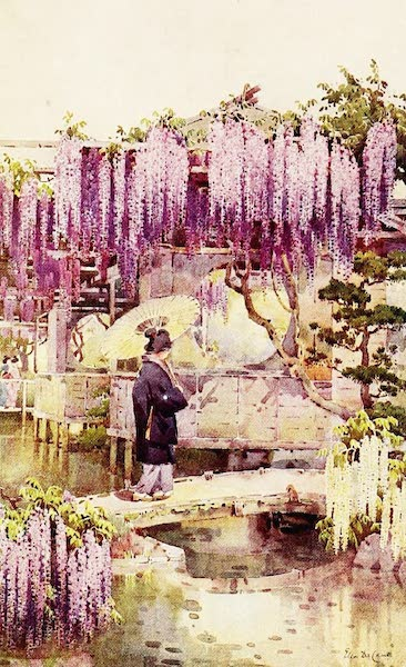 The Flowers and Gardens of Japan - Wistaria, Kabata (1908)