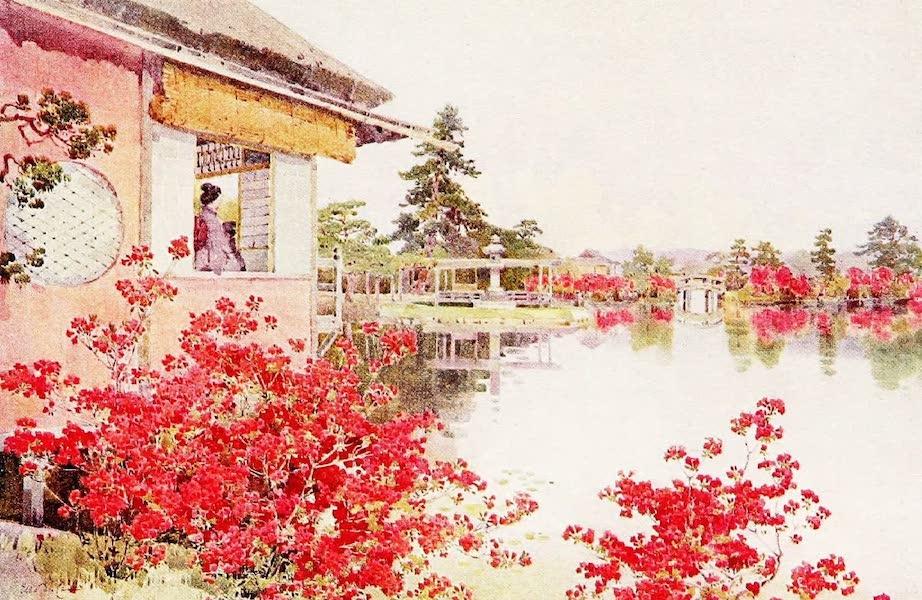 The Flowers and Gardens of Japan - Azaleas, Nagaoka (1908)