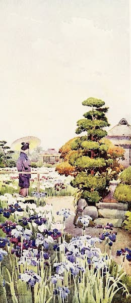 The Flowers and Gardens of Japan - Irises (1908)