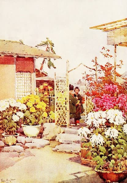 The Flowers and Gardens of Japan - Chrysanthemums, Kyoto (1908)
