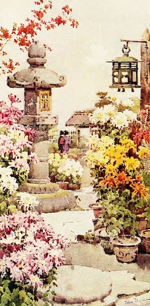 The Flowers and Gardens of Japan - A Chrysanthemum Garden (1908)