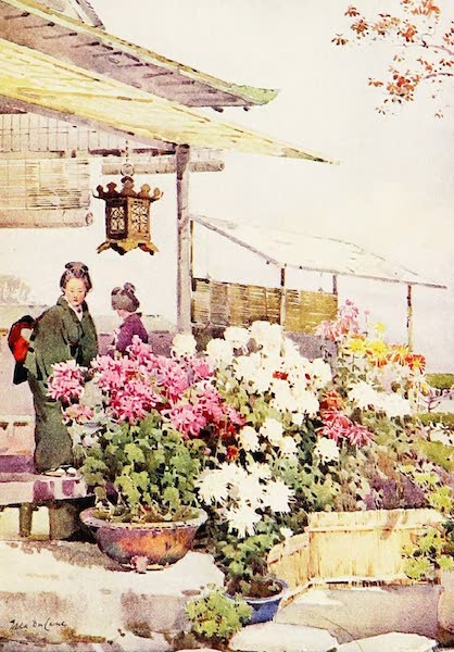 The Flowers and Gardens of Japan - Chrysanthemums (1908)