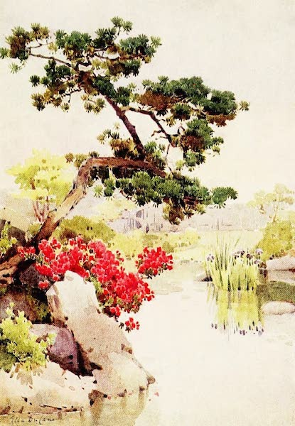 The Flowers and Gardens of Japan - Azalea and Pine-tree (1908)