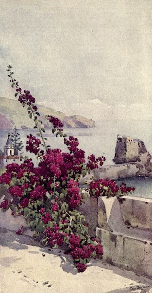 The Flowers and Gardens of Madeira - Loo Rock, Funchal (1909)