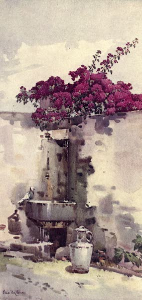 The Flowers and Gardens of Madeira - A Drinking Fountain (1909)