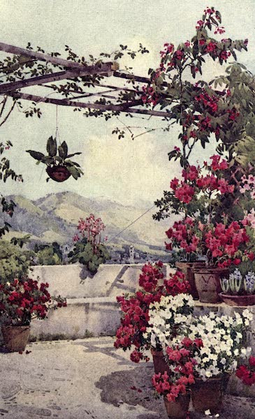 The Flowers and Gardens of Madeira - Azaleas, Quinta Ilheos (1909)