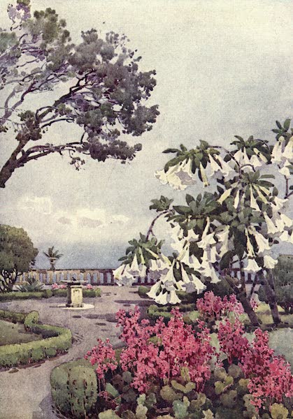 The Flowers and Gardens of Madeira - Datura, Quinta Vigia (1909)