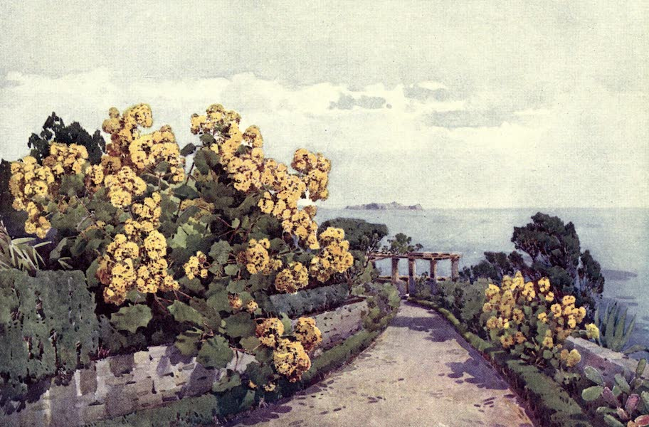 The Flowers and Gardens of Madeira - A Group of Senecio (1909)