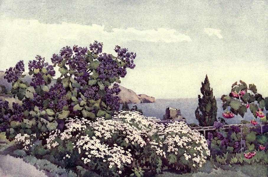 The Flowers and Gardens of Madeira - Weigandia and Daisies (1909)