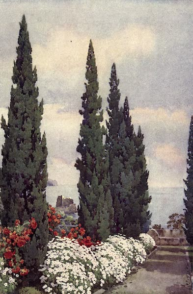 The Flowers and Gardens of Madeira - Cypress Avenue, Quinta Stanford (1909)
