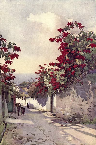 The Flowers and Gardens of Madeira - Poinsettia on the Mount Road (1909)