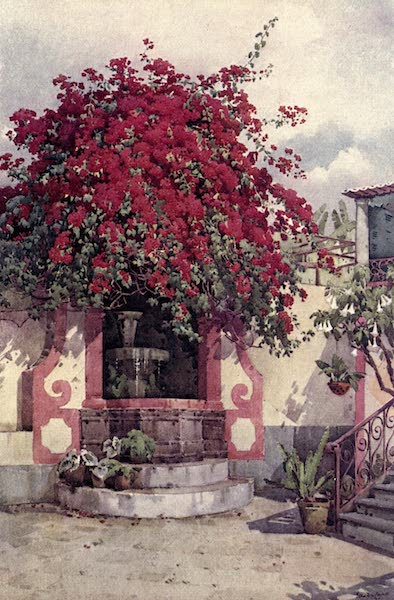 The Flowers and Gardens of Madeira - The Scarlet Bougainvillea (1909)