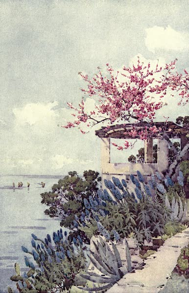 The Flowers and Gardens of Madeira - Pride of Madeira and Peach Blossom (1909)