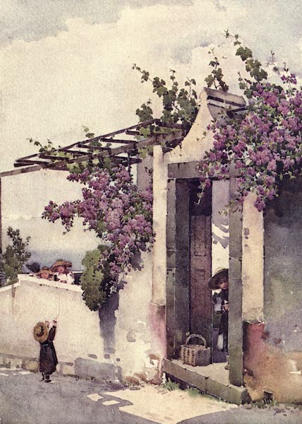 The Flowers and Gardens of Madeira - On the Torrinhas Road (1909)