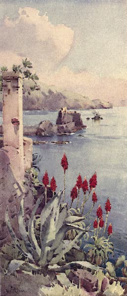 The Flowers and Gardens of Madeira - Red Aloes (1909)