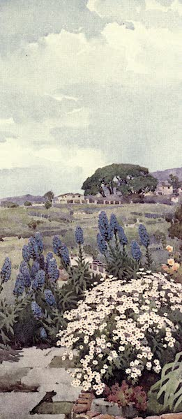 The Flowers and Gardens of Madeira - Pride of Madeira and Daisies (1909)