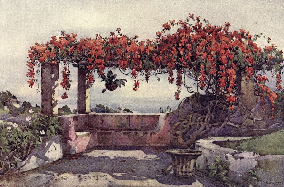 The Flowers and Gardens of Madeira - Bignonia Venusta (1909)