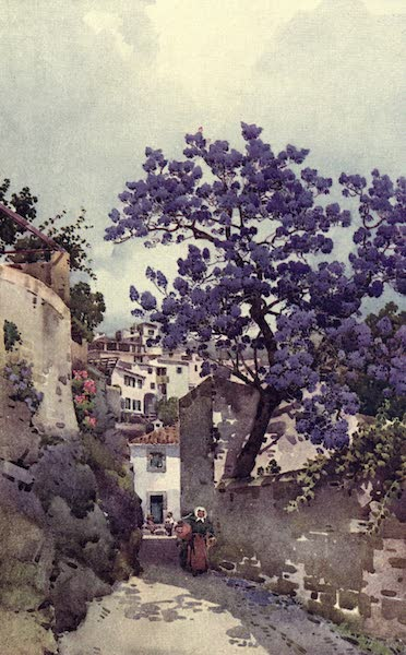 The Flowers and Gardens of Madeira - Jackaranda Tree (1909)